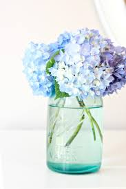 Fresh Cut Flower Preservative by Tip To Keeping Cut Hydrangeas Looking Fresh Love Of Family
