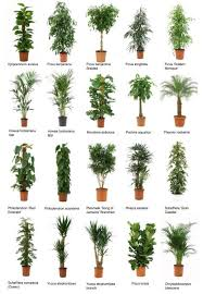 plants for office best office plants the 25 best office plants ideas on pinterest