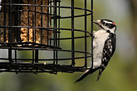 suet feeder tips for backyard birding
