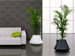 vasi da interno vasi e fioriere da interno foto design mag