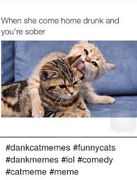 Drunk Cat Meme - when she come home drunk and you re sober dankcatmemes funnycats