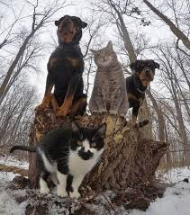 Pet Photo Albums Animals That Look Like They U0027re About To Drop The Hottest Albums Ever