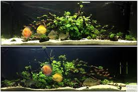 How To Aquascape A Planted Tank Cichlid Forum U2022 Geophagus Winemilleri U0026 Discus Planted Tank