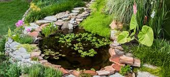 Frog Pond Backyard How To Have A Pond Without Having Mosquitoes Doityourself Com