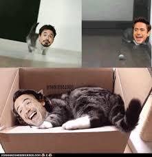 Face Replace Meme - i can has cheezburger face replace funny internet cats cat