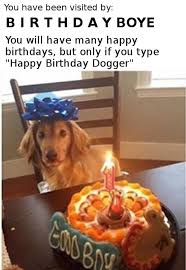 Birthday Cake Dog Meme - visited by dogs daily dog memes