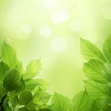 soft green beautiful soft green background with beech leaves stock photo