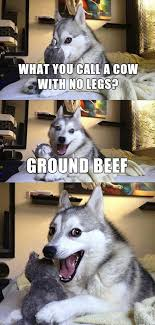 Funny Husky Memes - 15 pun husky meme jokes are insanely cute dose of funny