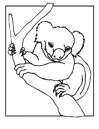 koala bear coloring page koala bear coloring pages