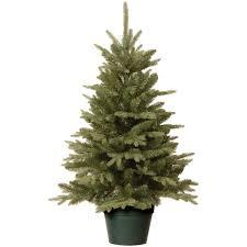 christmas season real christmas trees remarkable image concept