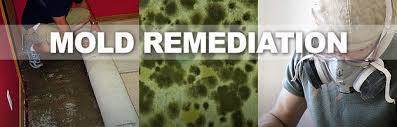 mold removal mold remediation in milford ohio