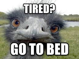 Ostrich Meme - livememe com obvious advice ostrich