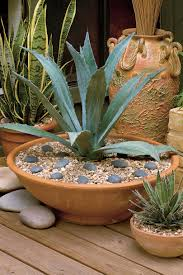 Outdoor Potted Plants Full Sun by Heat Tolerant Container Gardens For Sweltering Summers Southern