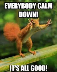 Squirrel Meme - squirrel meme funny and crazy squirrel pictures