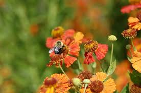 plants for pollinators birds and biodiversity horticulture 131
