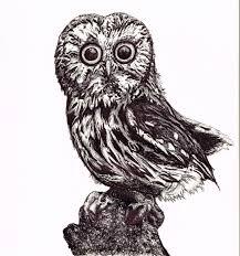 baby owl biro drawing u2013 gemmamarie