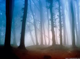 forest wallpapers page 3 nature wallpapers crazy frankenstein
