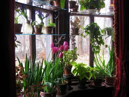 How To Arrange Indoor Plants by Forced Bulbs What To Keep What To Toss