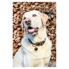 10375 rogz fancy dress armed response dog collar xlarge mocha bone