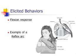 chapter 3 elicited behaviors and classical conditioning elicited
