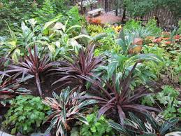 shade plants for central texas lisa u0027s landscape u0026 design pond