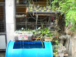 backyard fish farming how to create picture with cool backyard
