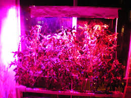 hydroponic led grow lights lighting building your own high power led grow lights for
