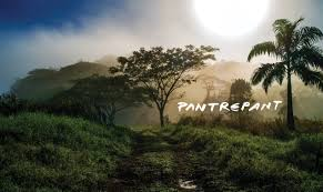 pantrepant a working cattle farm and exquisite escape
