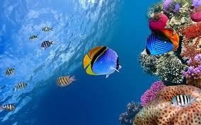 ocean life wallpapers 1600x1200 145 35 kb