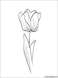 tulip coloring coloring pages