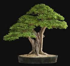 the 25 best miniature trees ideas on mini umbrella