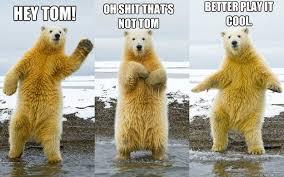 Bear Memes - scumbear bear memes