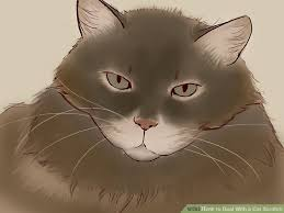 Cat Under Faucet Doctor Approved Advice On How To Deal With A Cat Scratch Wikihow