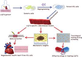 the further application of ipsc technique in lqts modified from