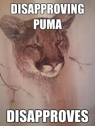 Puma Meme - disapproving puma memes quickmeme