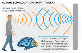 Artificial Eye For Blind The Blind Individuals Who See By Sound Discovermagazine Com