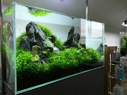 Diy Aquascape Seetharam Rai Uploaded This Image To U0027ada Rescaped Tank U0027 See The
