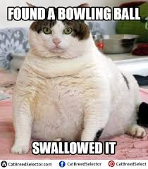 Insanely Funny Memes - funny fat cat memes funny cute angry grumpy cats memes