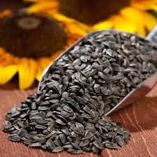 seed categories zielerco