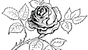 coloring pages with roses roses coloring pictures roses coloring pages printable roses