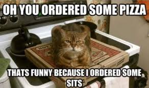 Mad Kitty Meme - funny teammates funny pictures quotes memes funny images