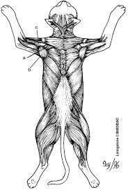 67 best anatomy images on pinterest anatomy life science and