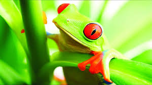 frog wallpapers high quality desktop pictures 47 guoguiyan