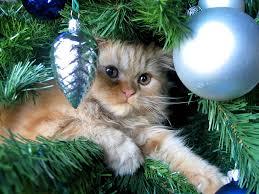 cats christmas trees 42 pics