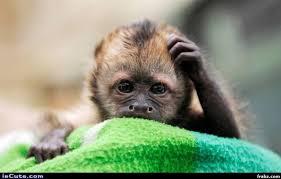 Monkey Meme Generator - confused monkey meme generator captionator caption generator frabz