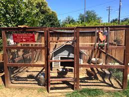 raising backyard chickens in sacramento u2013 sacramento mom blog