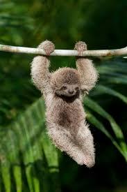 Amazon Rainforest Map Best 20 Rainforest Animals Ideas On Pinterest Brazilian
