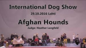 afghan hound national 2014 lahti international dog show 2016 u2022 afghan hounds youtube