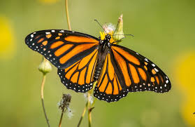 butterflies hashtag on