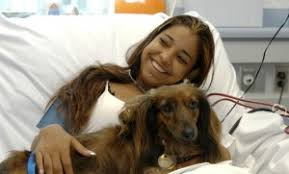 Comfort Dogs Certification Therapy Dog Certification